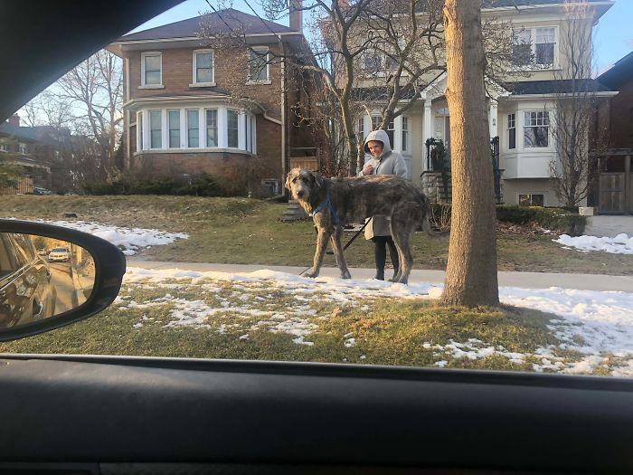 Saw This Guy Driving Home. Had To Pull Over Because I Have Never Seen Anything Like This In My Life