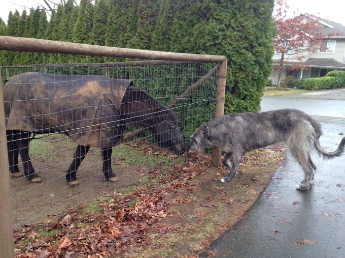 My Dog Merlin Met A Horse