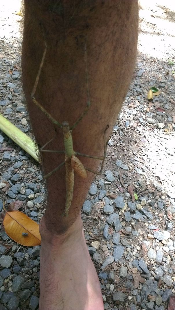 Felt A Tickle On My Leg, Australia