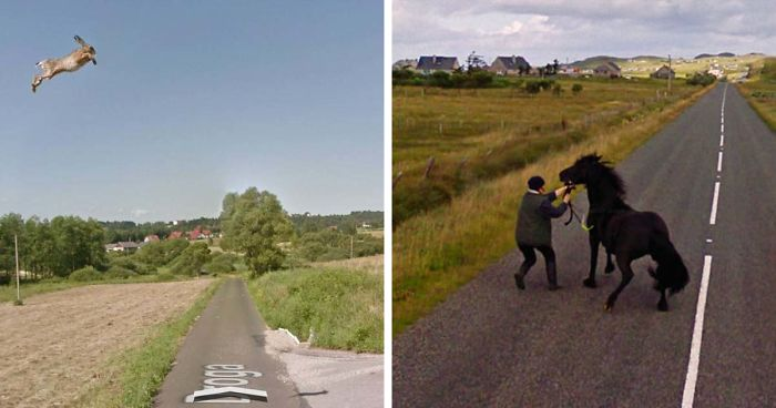 30 Best Accidentally Taken Animal Pics By Google Street View