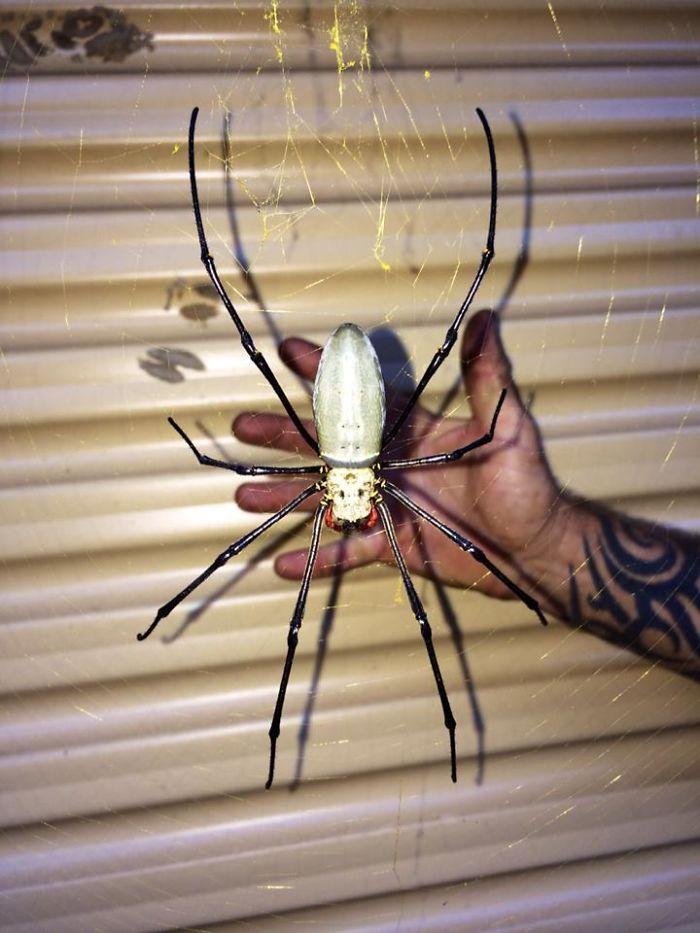 Encontrada al sudeste de Queensland