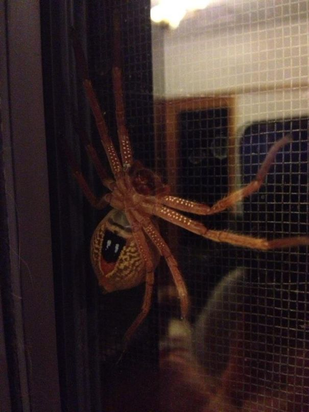 So My Friend Found This On Her Back Door. Only In Australia Right?