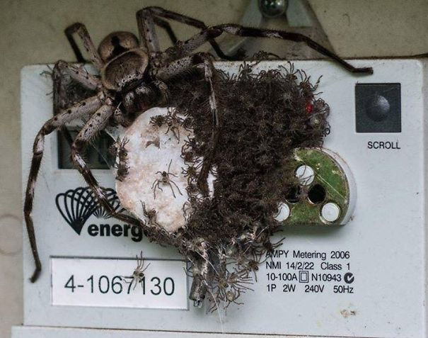 This Is How Australians Ensure Their Electricity Meter Doesn't Get Read