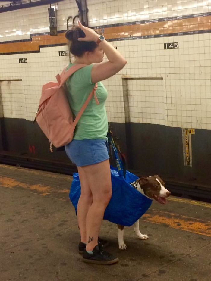You Can't Bring Your Dog On The Subway In New York Unless It Fits In A Bag