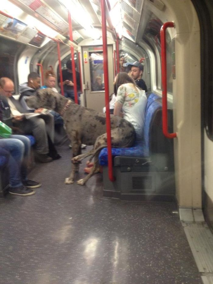 Chilling Out On The Tube... Like A Boss