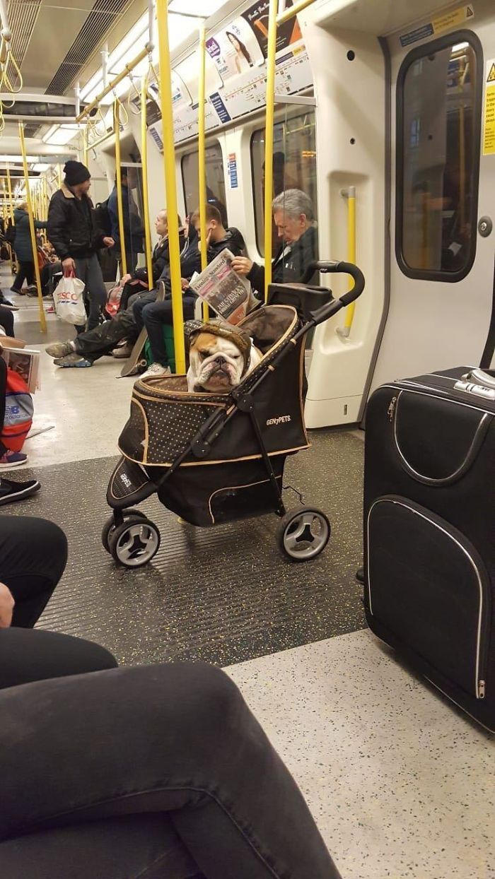 Someone's Enjoying Their Evening Commute