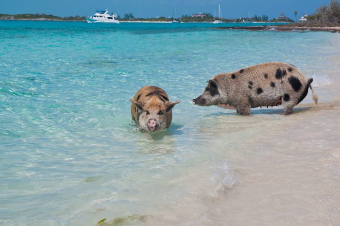 Meanwhile In The Bahamas