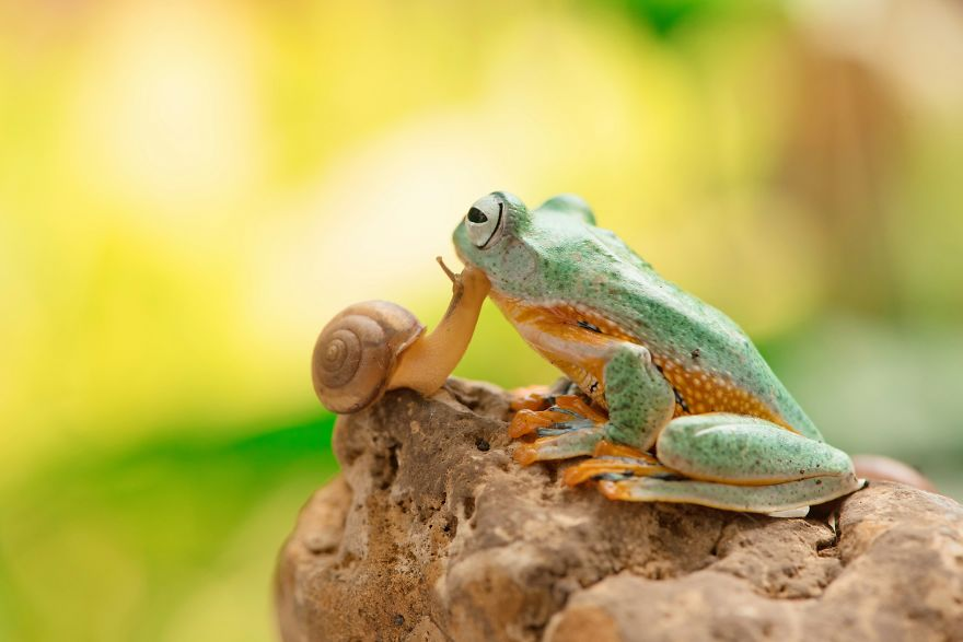 The Snail Kisses The Frog