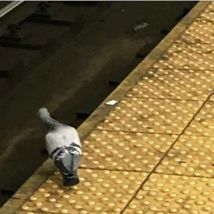 This Pigeon Is Out Here Looking Like Every NYer Waiting For The Train