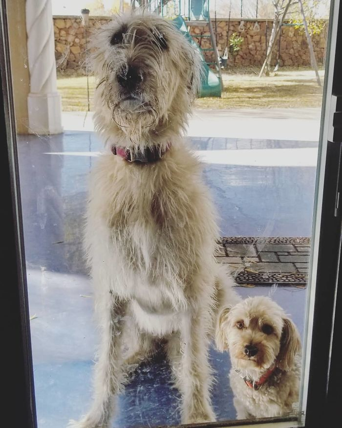 I Think If We Stare Really Hard And Don't Move They Will Let Us Back In