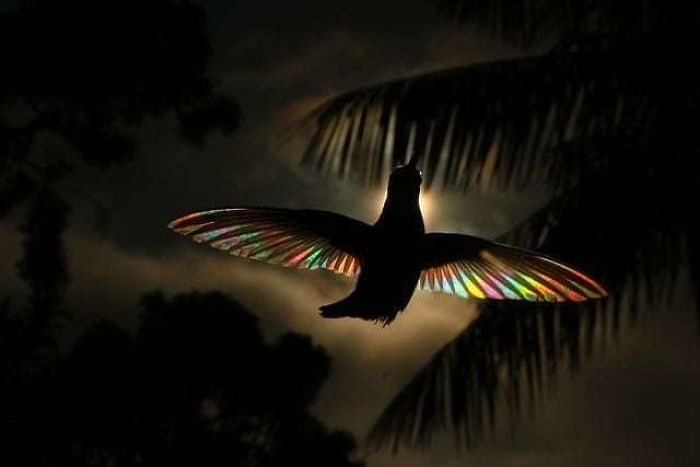 9 Magical Pictures Of Hummingbirds' Wings Shining Like Rainbows