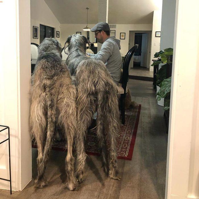 King Size Fur Babies
