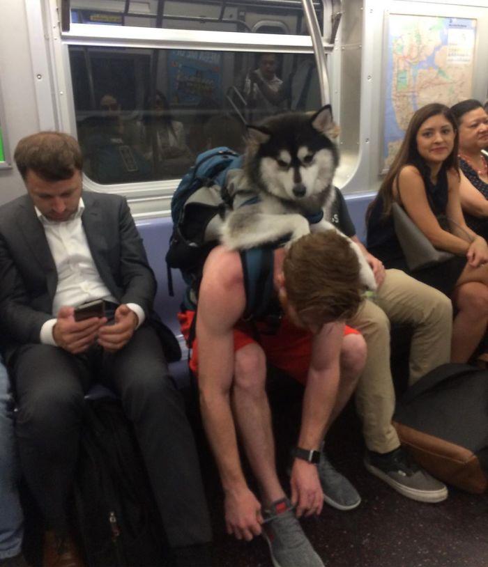 Llevaba al perro en una mochila customizada y todos sonreían