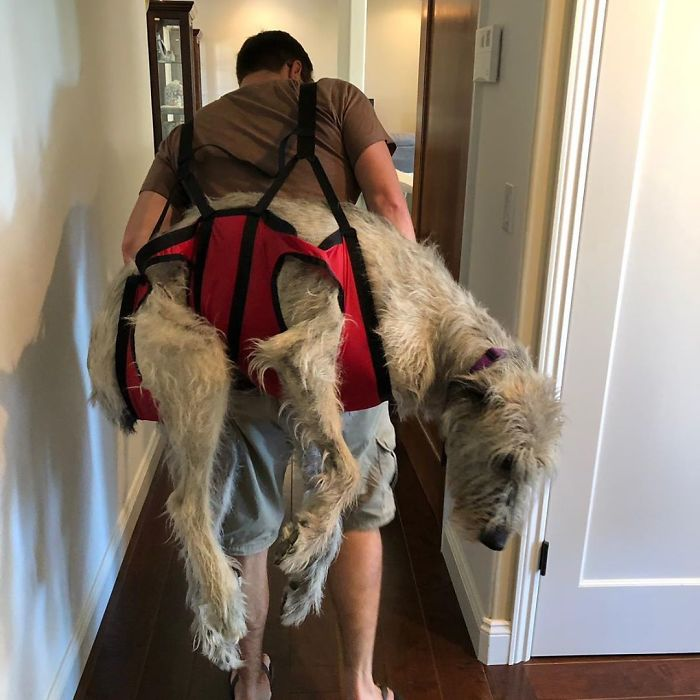 Mommy Got Me An Emergency Dog Carrier In Case I Get Hurt Out Hiking! I'm Pretty Chill Being Carried, But Mommy Can't Pick Me Up!