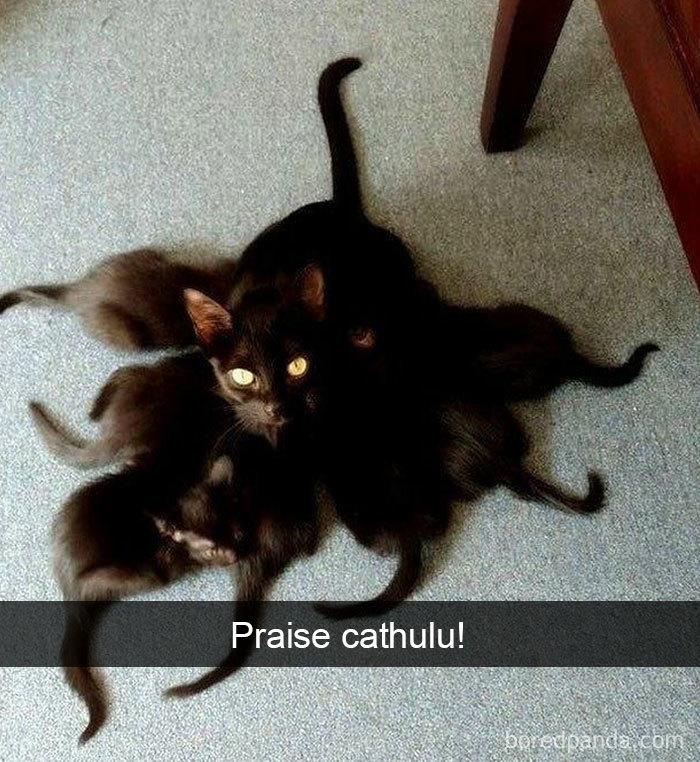 Cat-Snapchats