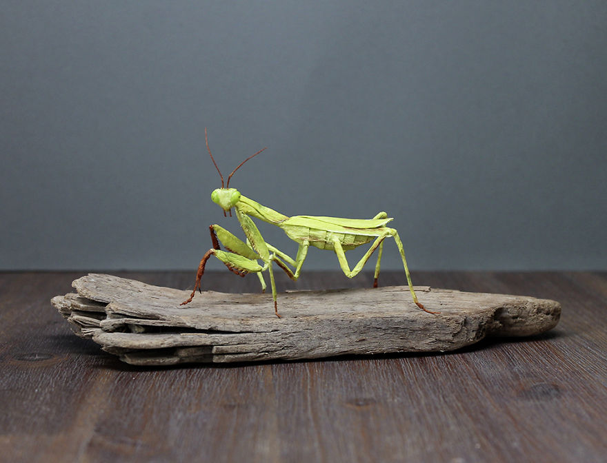 I Am A Paper Artist And I Make Realistic Animals And Insects From Paper (24 Pics)