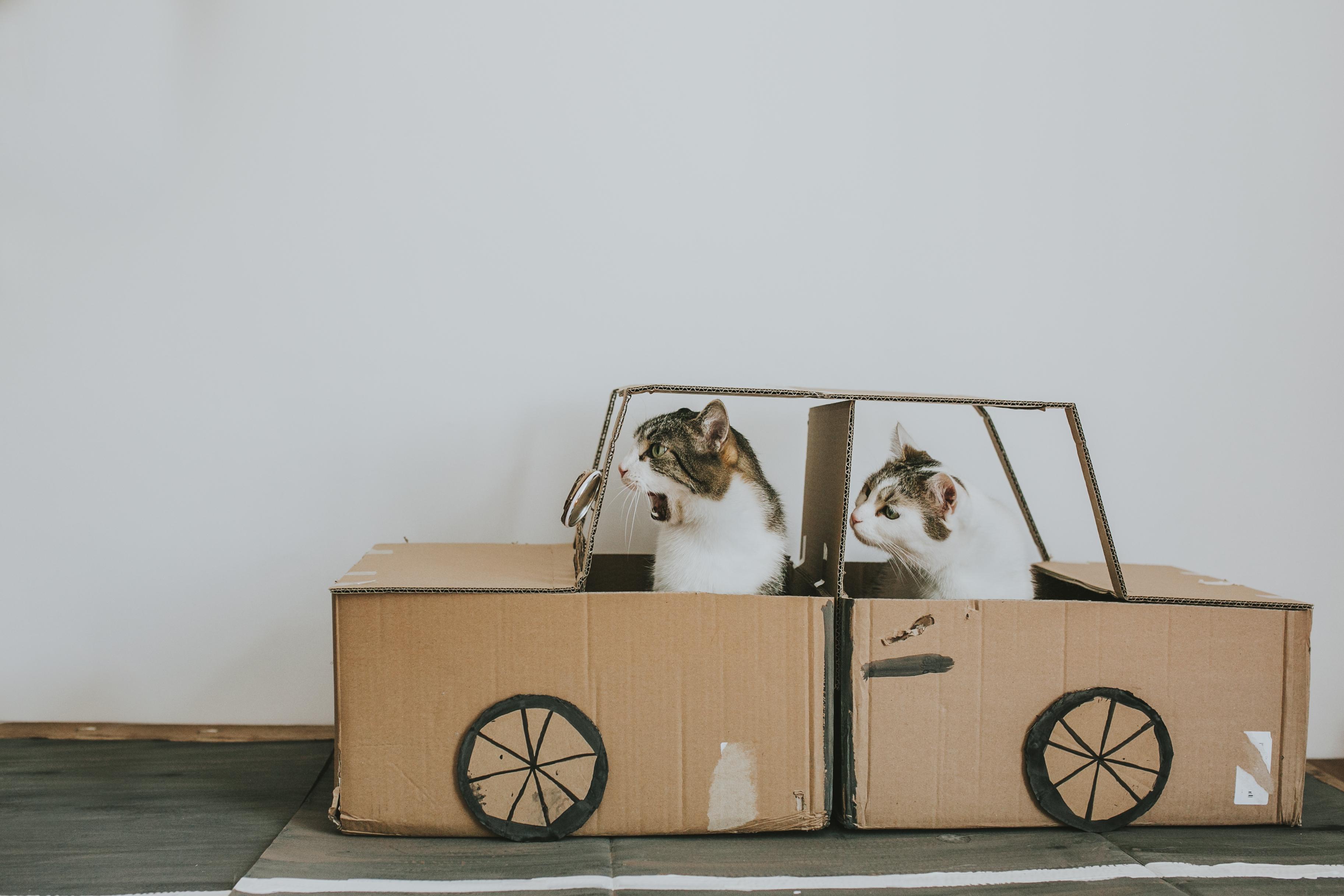 Cats' Cardboard World
