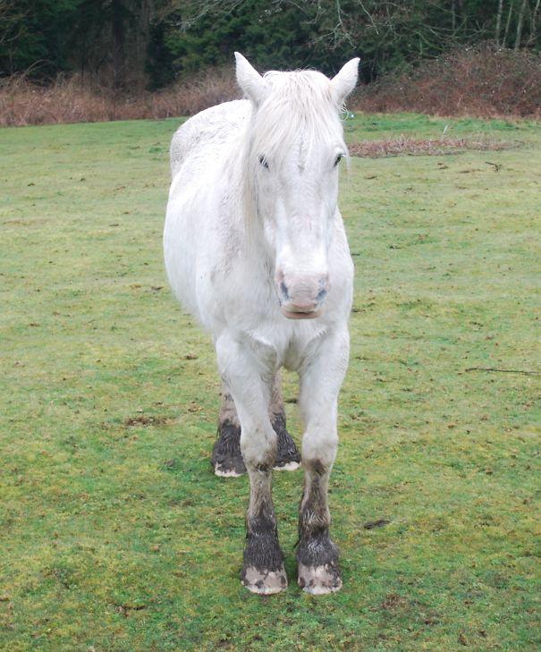 Horse-5d3bf491542e3.jpg