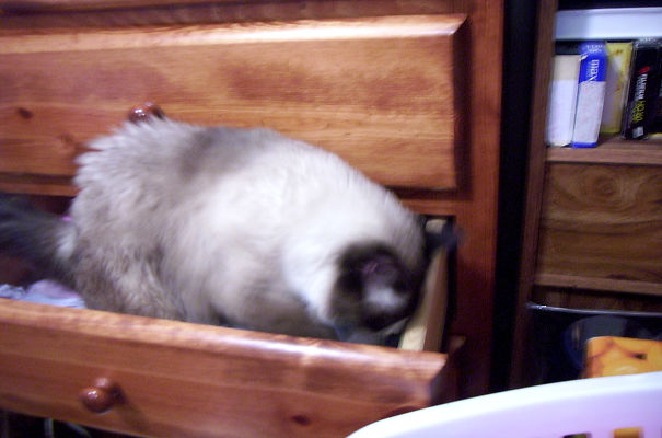 Kitty_in_the_dresser_drawer-001-5d32bc6405566.jpg