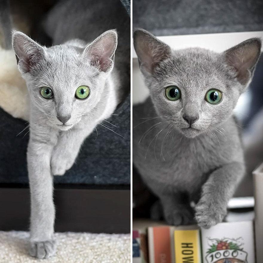 Russian blue eyes