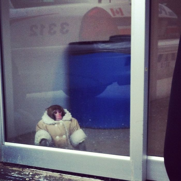 Anyone Lose Their Monkey At IKEA? Toronto