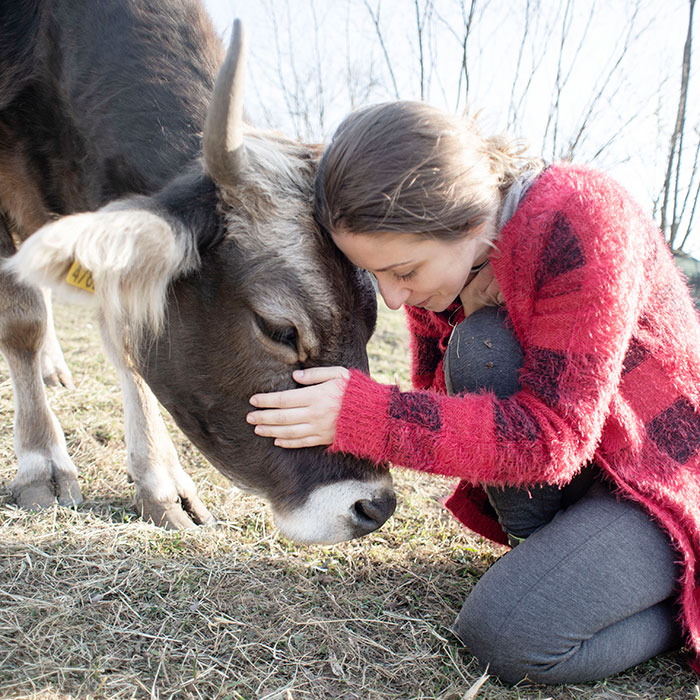 We Show 20 Reasons Why Cows Should Be Petted, Not Farmed