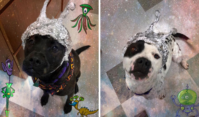 This Animal Shelter Asks People To Raid Them Instead Of Area 51