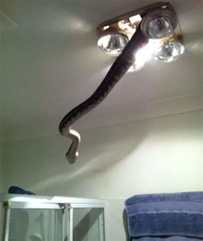 En Australia todo intenta matarte, hasta la luz del techo