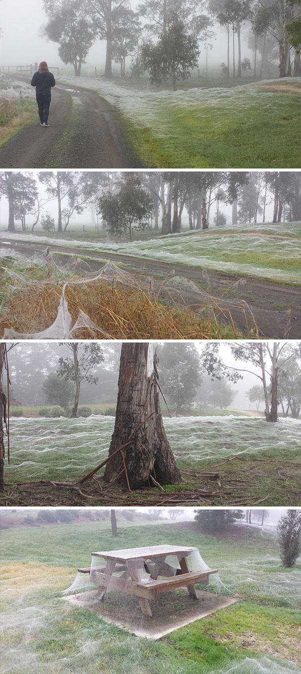 Spider Frost. Rural Victoria, Australia