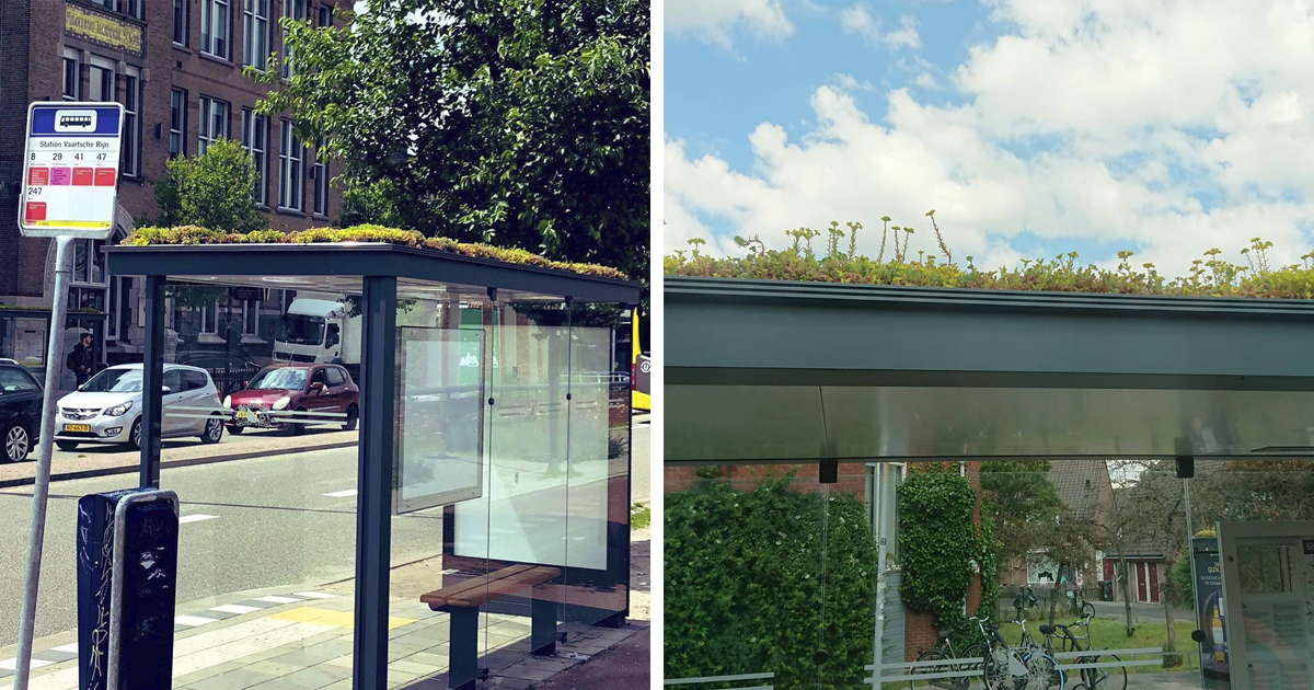 The Netherlands Embraces The Problem Of Bee Endangerment By Installing Green Roofs On 316 Bus Stops