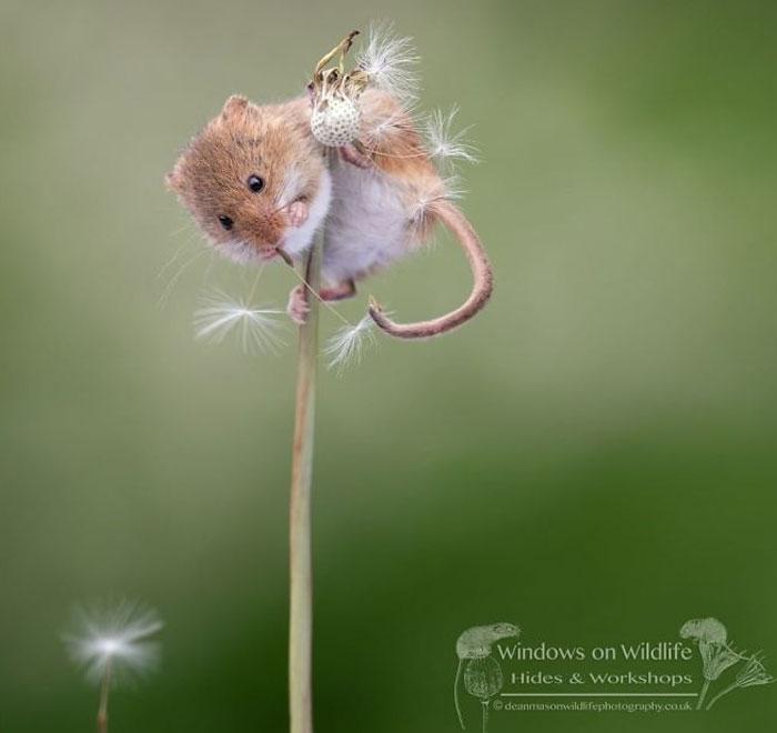 Cute-Harvest-Mouses-Dean-Mason-Photography