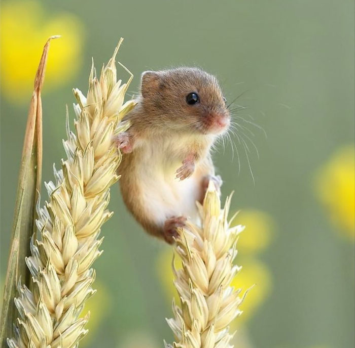 Cute-Harvest-Mouses-Dean-Mason-Photography
