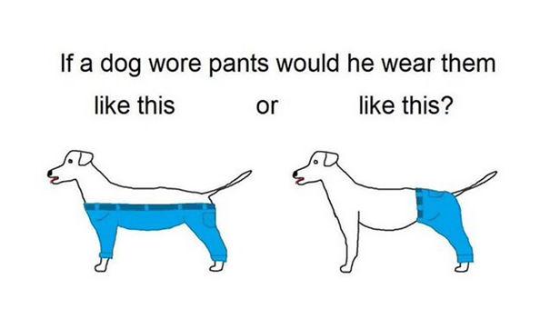 dog-pants-5d399388b37fe.jpg