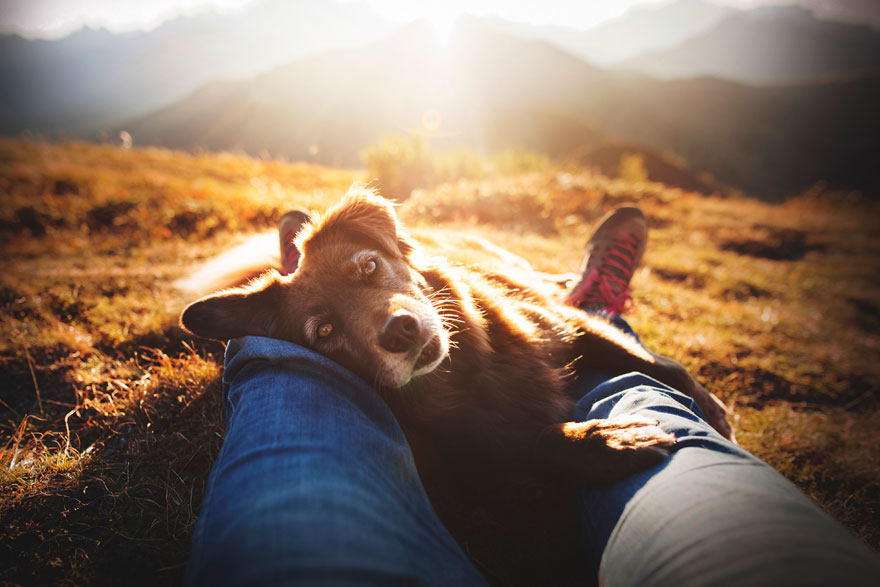 Rescue Dogs Charity Category 1st Place Winner, 'Finntastic' By Anne Geier, Austria