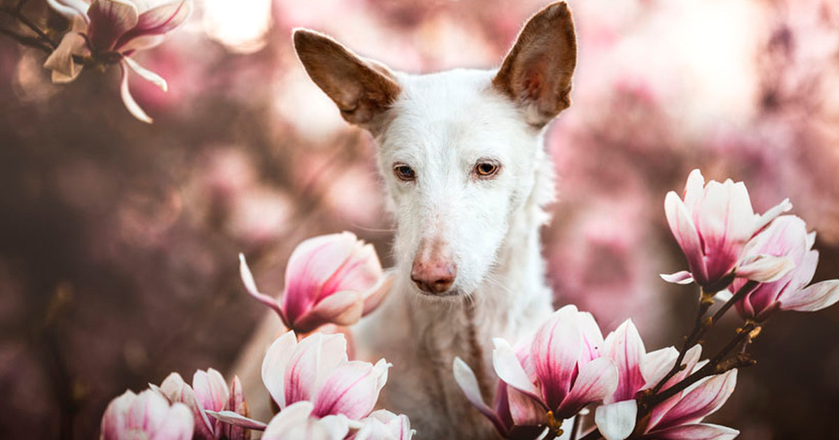 37 Winning Photographs From The 2019 Kennel Club Dog Photographer Of The Year Competition