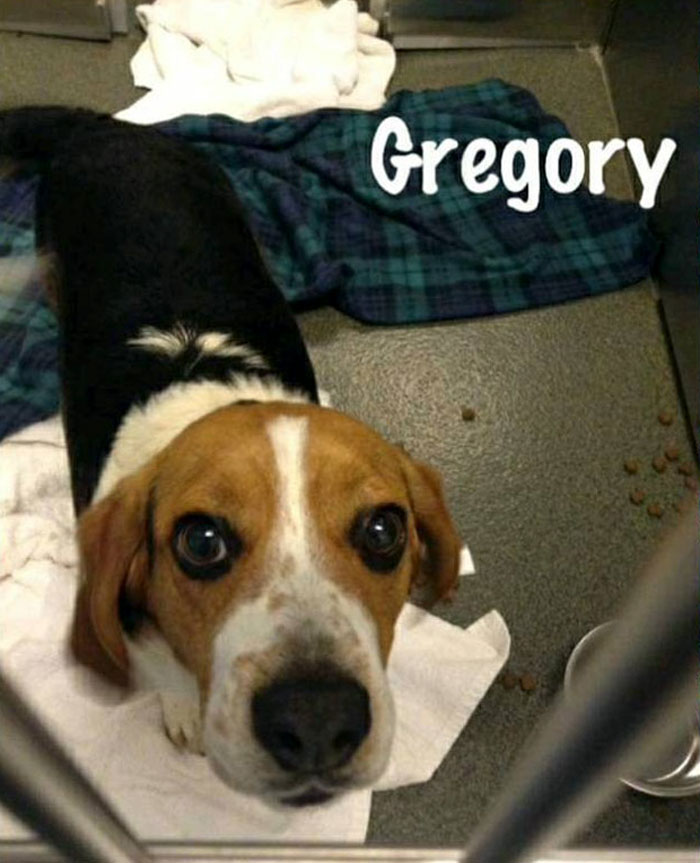 Man Rescues A Beagle From Being Euthanized In A Shelter, The Dog Can't Contain His Gratitude, Hugs His Rescuer