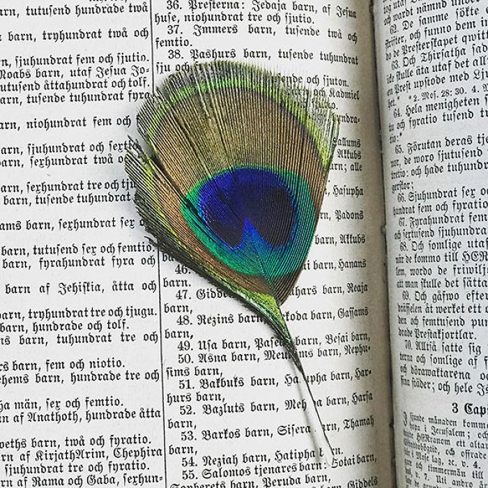 En una Biblia de 1860