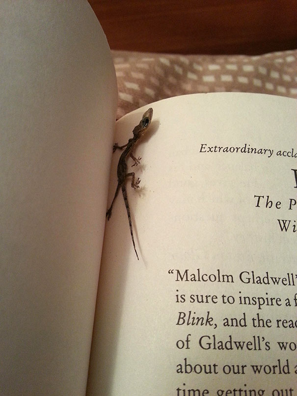 Found A Dried Lizard Between My Book's Pages
