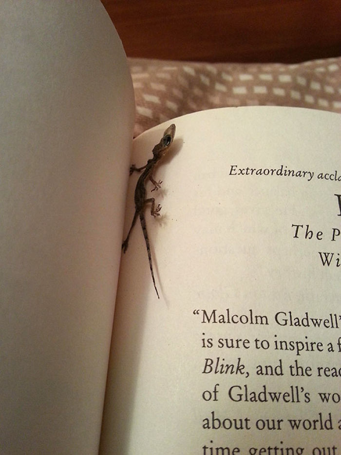 He encontrado una lagartija desecada entre las páginas de mi libro
