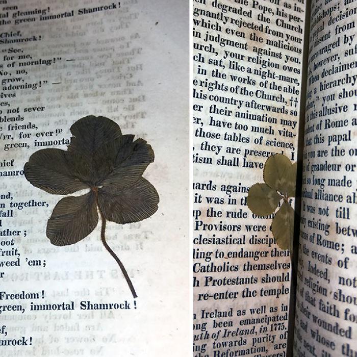 Tréboles de 4 y 5 hojas encontrados en un libro de casi 200 años
