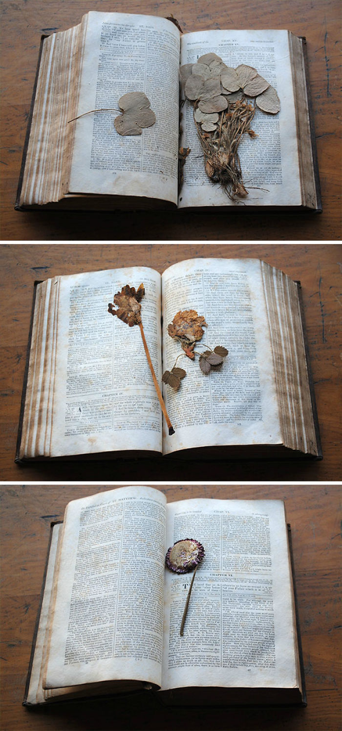 Dentro de este libro de 1833 había muchísimas plantas prensadas y flores secas