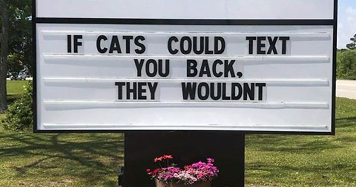 30 Of The Funniest Cat Jokes Vet Clinics Put Up On Their ...