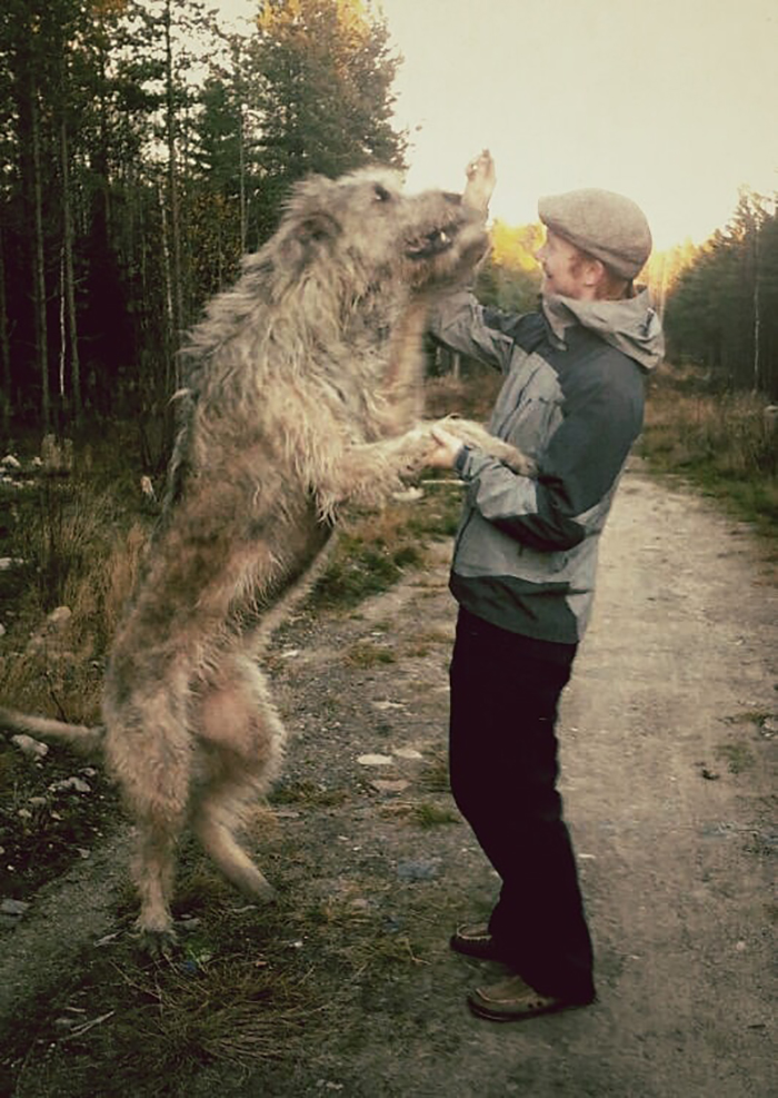 Me With My Late Irish Wolfhound Faust.  I'm 184cm