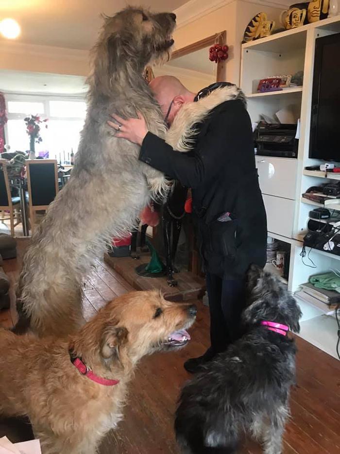 My Irish Wolfhound With My Dog Walker