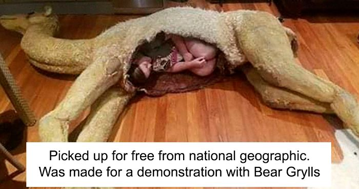 147 Times People Shared Their Weirdest Secondhand Finds (New Pics)