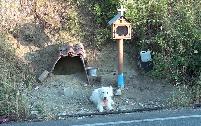 Loyal Dog Refuses To Leave His Owner's Car Crash Site For 18 Months So Locals Built Him A Home