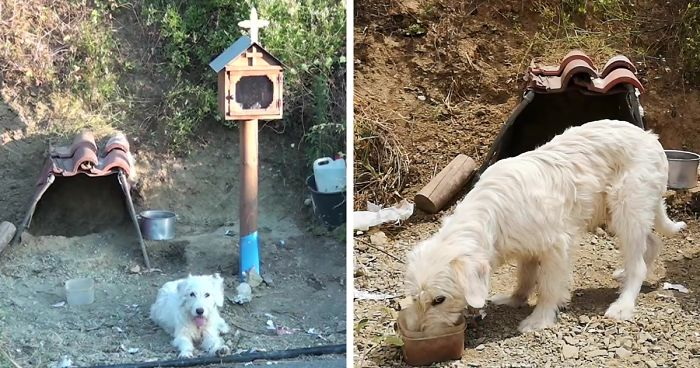 Loyal Dog Has Been Waiting By His Owner's Car Crash Site For 18 Months So Locals Built Him A Home