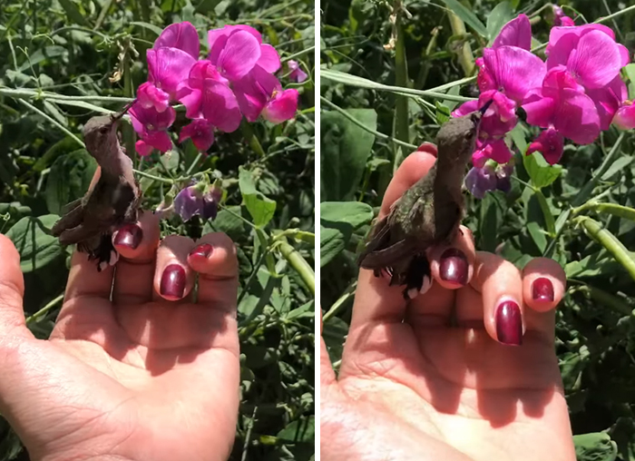 Woman Saves A Hummingbird That Fell Off A Tree, It Repays By Making Her Look Like A Real-Life Disney Princess