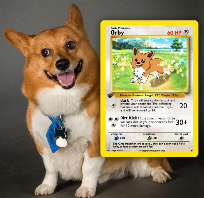 Artist Transforms Pets Into Pokémon Cards (30 Pics)