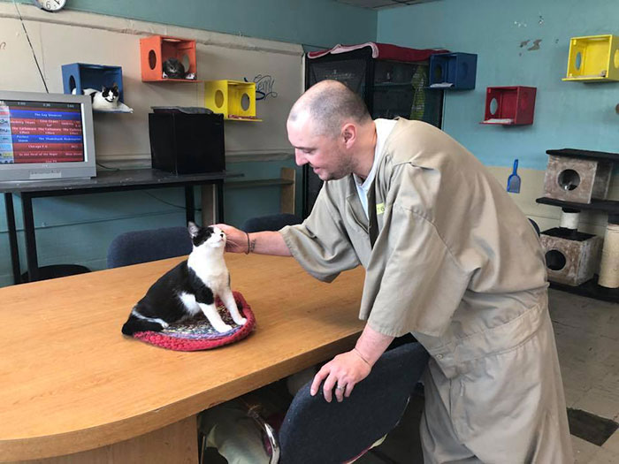 Prison In Indiana Accepts Shelter Cats And They Change Prisoners